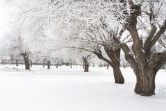 树冰结构树 免版税库存图片