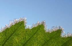 树冰水晶在叶子的 库存图片