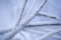 树冰 免版税图库摄影