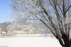 树冰 免版税库存照片