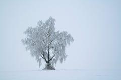 树冰 库存照片