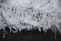 树冰 库存图片