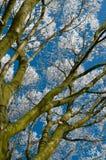 树冰treetree 免版税图库摄影