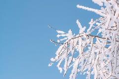 树冻结的分支在蓝天背景的 背景蓝色雪花白色冬天 复制空间 库存图片
