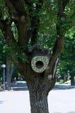 树凹陷 库存照片