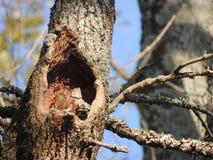 树凹陷 免版税库存照片