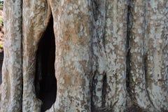 树凹陷 免版税库存图片
