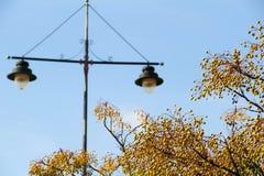 树分支与天空和街灯的在背景 库存图片