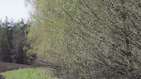 树分支与被孵化的叶子的 影视素材