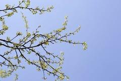 树分支反对蓝天的 现出轮廓树反对天空背景  免版税库存图片