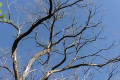 树分支反对蓝天的 库存图片