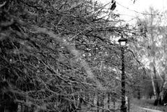 树分支在公园 免版税库存照片