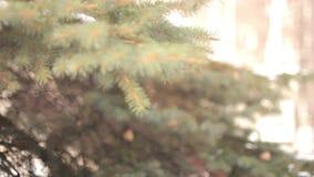 树分支在冬天公园 股票录像