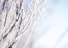 树分支在树冰的 免版税图库摄影