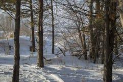 树分支在森林,冬天丛林里 免版税库存图片
