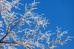 树分支在霜的在蓝天背景  免版税库存照片