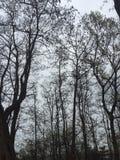树分支对天空的 库存照片