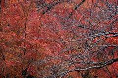 树分支没有叶子的在树的雨和背景红色叶子以后 免版税库存图片