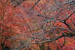 树分支没有叶子的在树的雨和背景红色叶子以后 免版税图库摄影