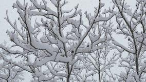 树分支用雪报道 降雪 影视素材