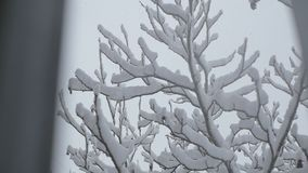 树分支用雪报道 降雪 股票视频