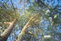 树分支的美丽的景色  库存照片