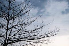 树分支结构和与黑暗的光的死亡木头 库存照片