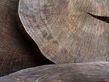 树切口或木材产业显示与木圆盘 免版税库存图片