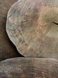 树切口或木材产业显示与木材圆盘 库存照片