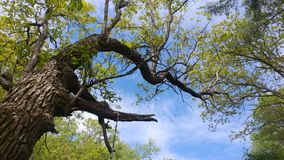 树到天空里 图库摄影