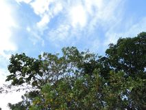 树前景,天空背景 免版税库存图片