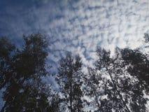 树剪影与壮观的蓝天的 库存照片