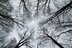 树剪影从地面到天空 库存照片