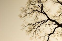树剪影分支  免版税库存图片