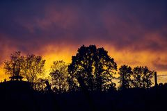 树剪影反对令人惊讶的日落天空的 免版税库存图片