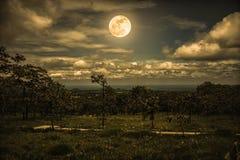 树剪影反对夜空的与云彩和明亮的fu 免版税库存照片
