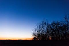 树剪影反对天空蔚蓝,黎明的 免版税库存照片