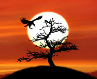 树剪影和一只鸟反对日落 库存照片