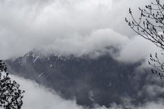 树剪影和雨在森林山 图库摄影
