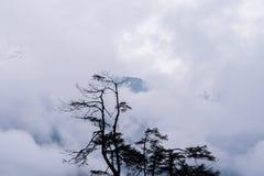 树剪影和雨在森林山 免版税库存照片