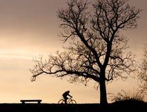 树剪影和骑自行车者 库存照片
