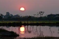 树剪影在反射在水中的日落的 图库摄影