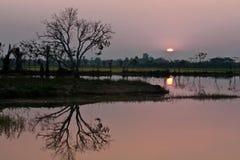 树剪影在反射在水中的日落的 免版税库存图片