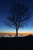 树剪影在夜之前 免版税库存图片