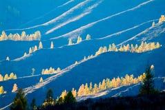 树剪影在山的在日落 免版税库存照片