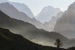 树剪影在山背景的 有薄雾的早晨在喜马拉雅山,尼泊尔, 免版税库存图片
