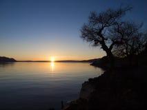 树剪影在日内瓦湖的在日落期间 库存照片