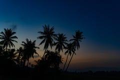 树剪影在日出期间的 免版税库存照片