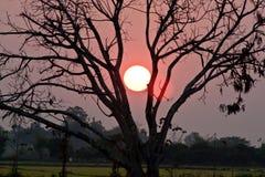 树剪影在日落的 免版税库存图片