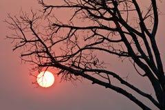 树剪影在日落的 免版税库存照片